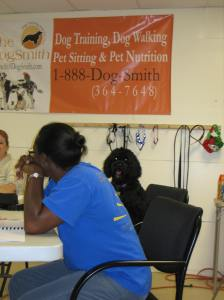 Lilly seated for class, she looks more relaxed than Christina who is studying Operant Conditioning