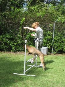 Niki teaching Deuce to jump, a nice break from loose leash walking