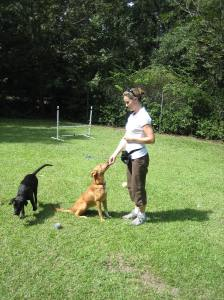 Rachel working with Zoey to teach her sitting and maintain behaviors with distractions