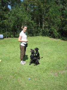 Rachel Training Two Alaqua Animal Refuge Pups