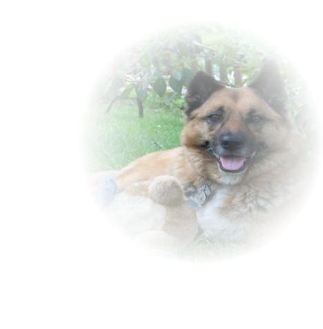 Dobie Dog