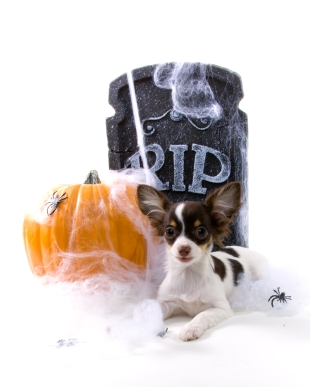 Halloween Can Be Scary For Our Pets