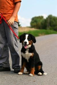 Dog Training Methods - Children can use
